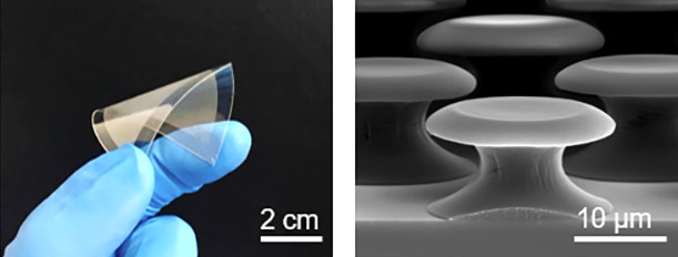 microstructures create a powerful underwater adhesive