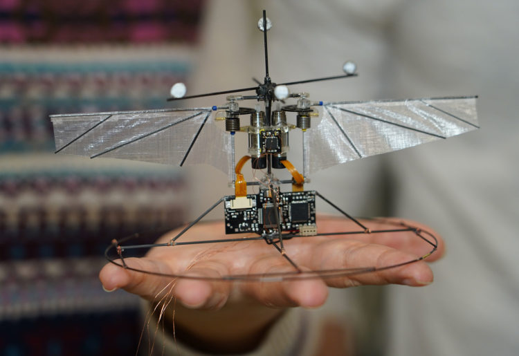Purdue University researchers are building robotic hummingbirds that learn from computer simulations how to fly like a real hummingbird does. (Image: Jared Pike)